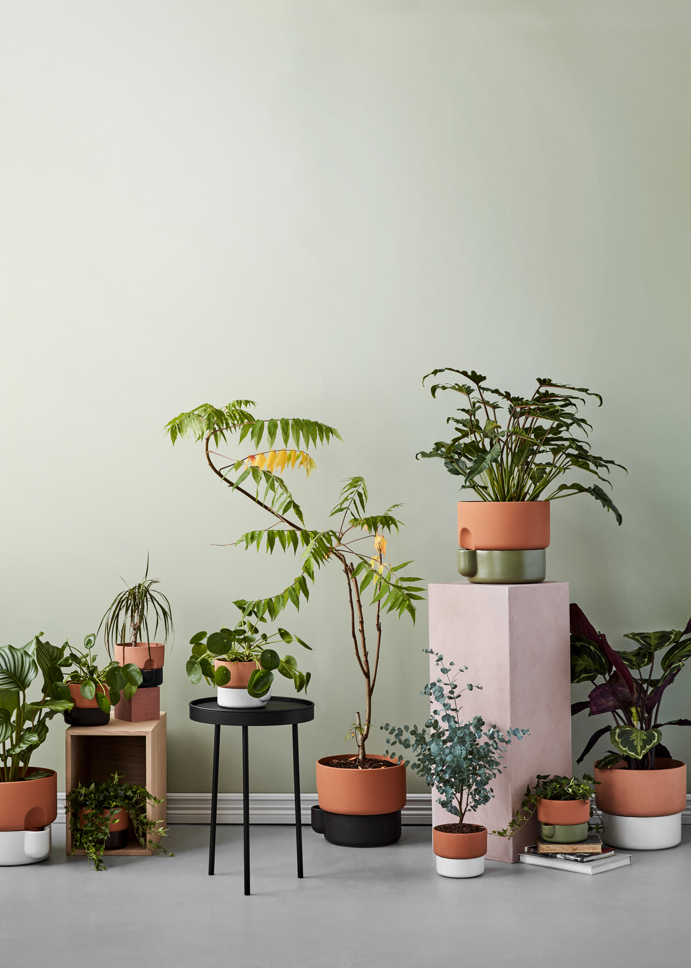 Oasis_flower pots_group_portrait - Northern