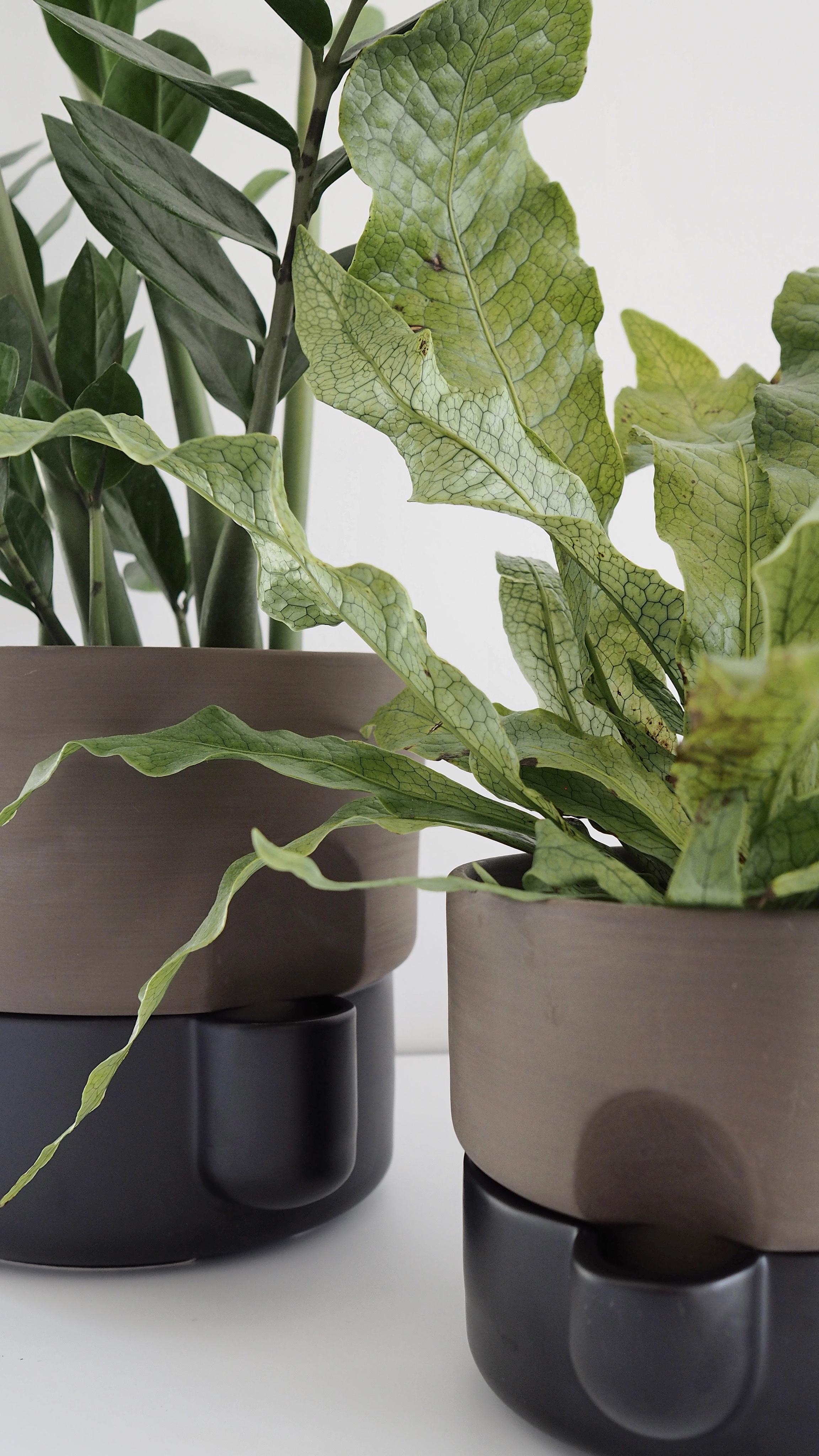 Northern_Oasis_self-watering_flowerpot_2Holiday_Care_for_Houseplants_Nicola_Capper.jpg