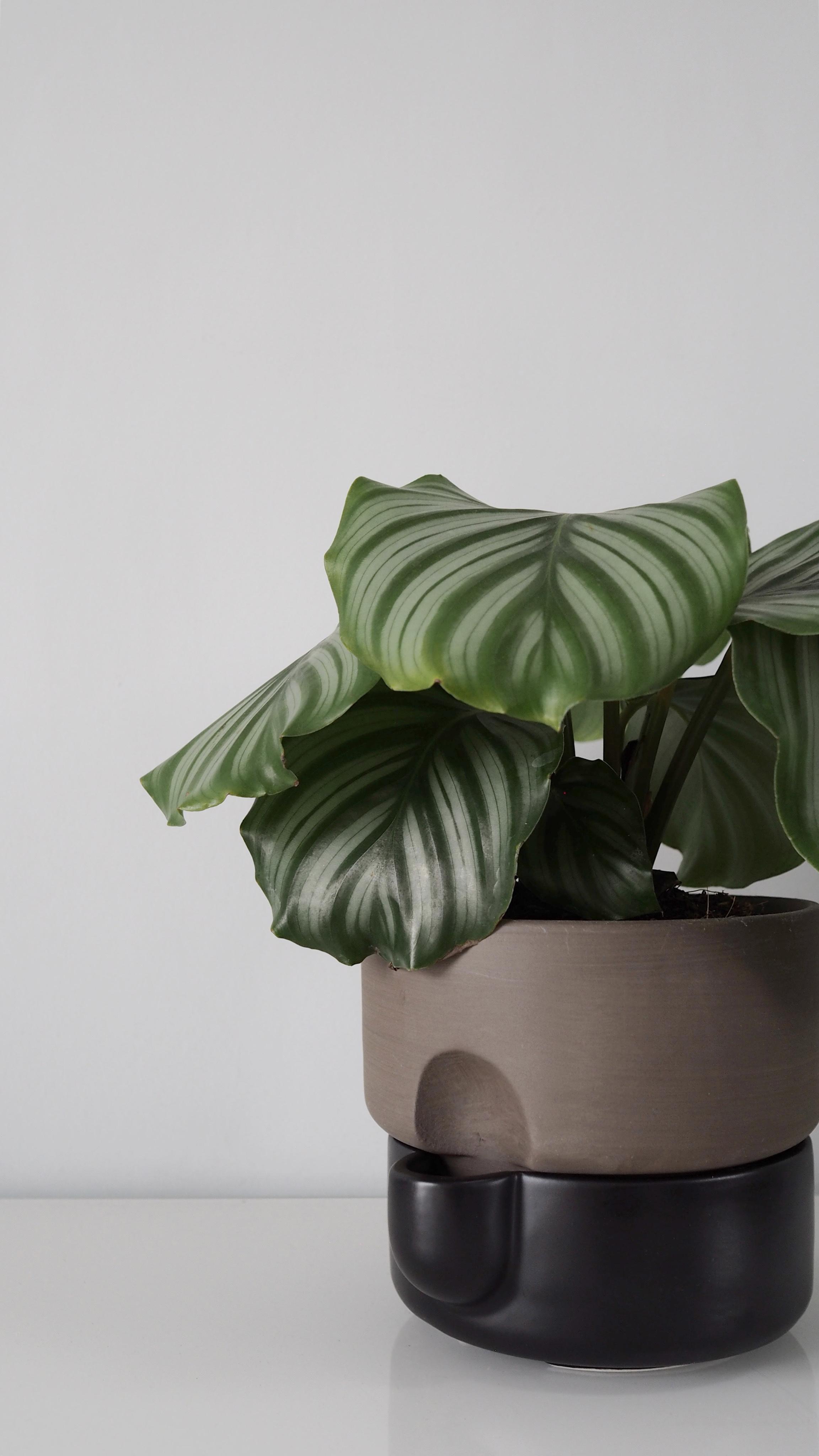Northern_Oasis_self-watering_flowerpot_window_3_Holiday_Care_for_Houseplants_Nicola_Capper.jpg
